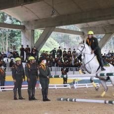 Curso de Preparador de Ganado Equino