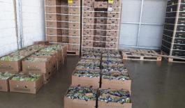 Incautamos-209-kilos-de-cocaína-ocultos-en-cajas-de-banano.