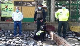 allanamiento_centro_ilegal_de_almacenamiento_de_tortugas