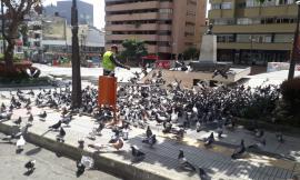 alimentando-palomas