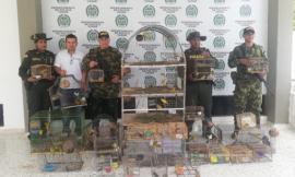 Controles-al-tráfico-ilegal-de-fauna-en-el-Cesar