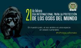 dia_internacional_para_la_proteccion_de_los_osos