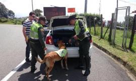Policía-se-incauta-de-400-kg-de-marihuana-que-irían-hacia-cartagena-1