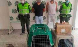 policia-magdalena-medio-capturados-faunasilvestre