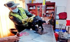 Policía rescató canino maltratado en el barrio reposo de Quibdó
