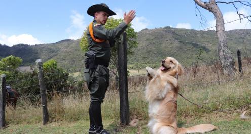 Guías Caninos
