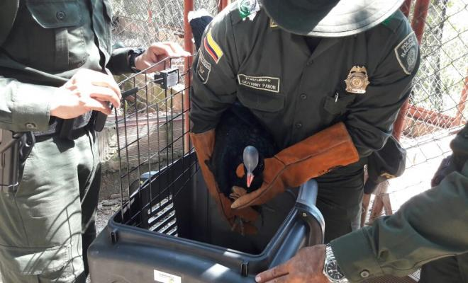 en-el-municipio-de-el-zulia-21-especies-silvestres-fueron-salvaguardados