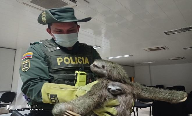 En el departamento del Chocó protegemos los animales