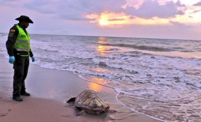 liberación-de-tortugas